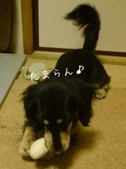 2014-03-03-01-41-57_deco