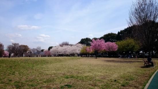 2014-04-03-13-49-10_deco