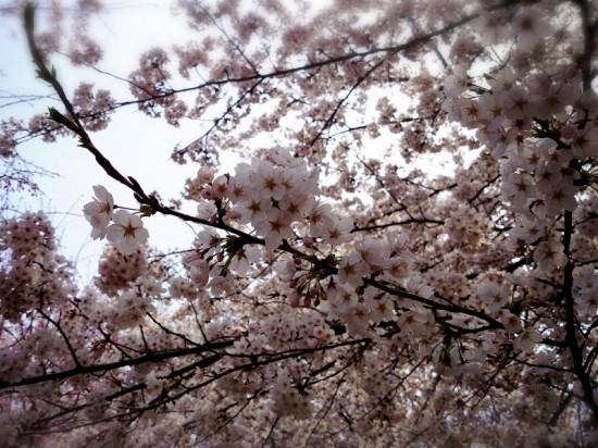 2014-04-03-13-50-53_deco
