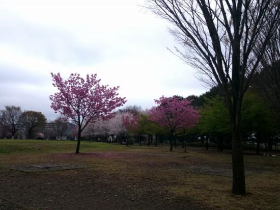 2014-04-04-11-01-55_deco