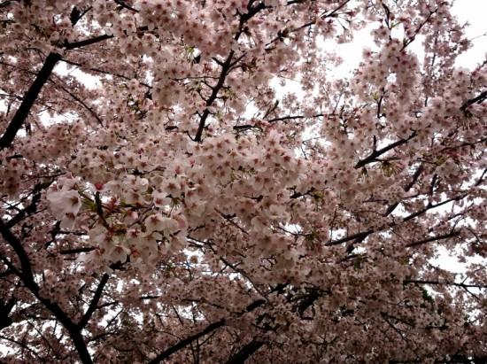 2014-04-04-11-03-38_deco