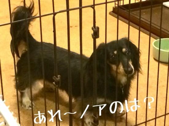 2014-08-10-23-37-03_deco