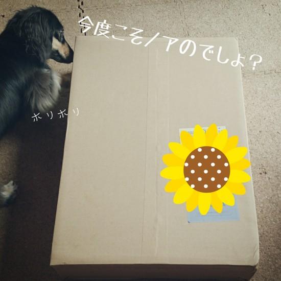 LINEcamera_share_2014-08-27-13-08-32
