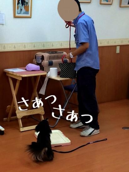 2014-09-09-13-40-09_deco