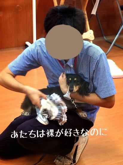 2014-09-09-13-42-23_deco