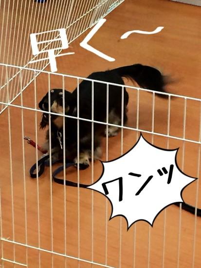 2014-09-10-12-22-34_deco