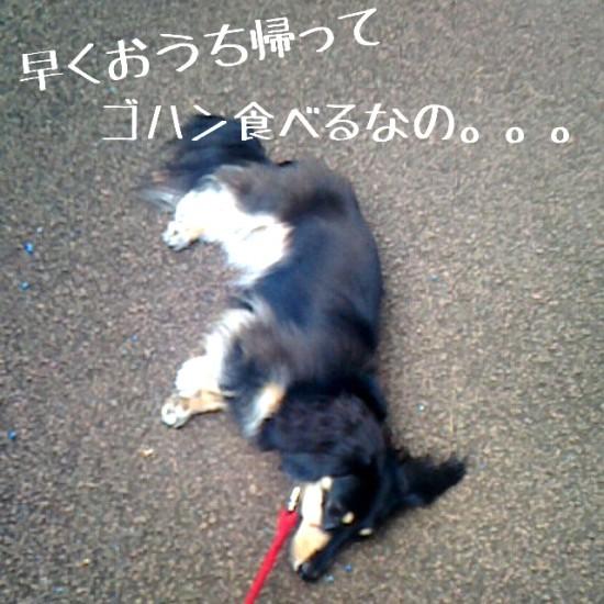 2014-09-16-12-03-14_deco
