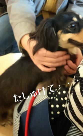 2014-11-04-01-49-44_deco