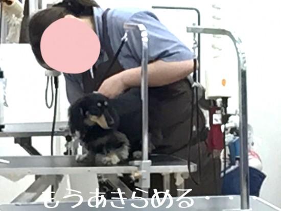 2014-11-06-22-35-33_deco