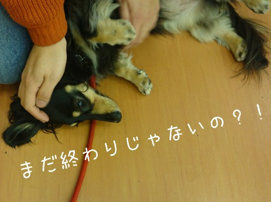 2014-12-01-00-30-52_deco