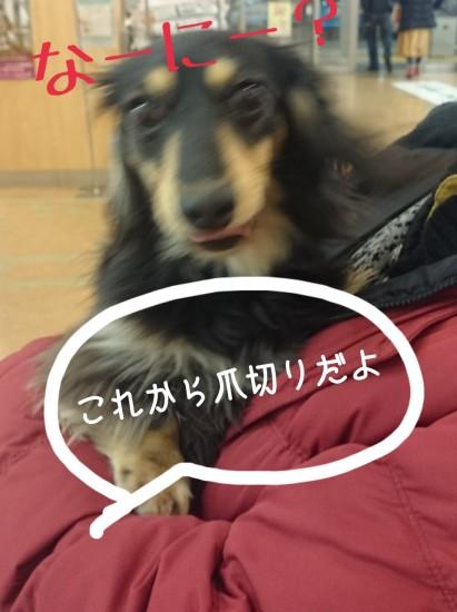 2015-01-12-15-02-30_deco