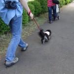 Dog Garden ZEBRAでダックス祭り③