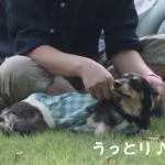 小谷流の里 ドギーズアイランド③ ~ドッグラン中編~