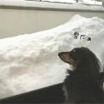 暖冬だって言ってたらいきなりの積雪ですよ