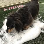 さらに雪のあと・・・