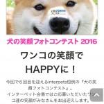 犬の笑顔フォトコンテスト応募は今日まで!